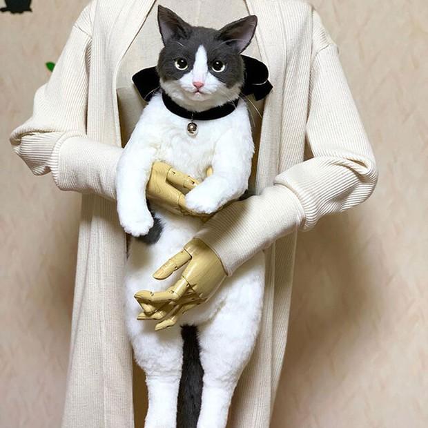 Balo mèo gây lú phá đảo trái tim netizen Nhật, giống thật tới nỗi hội chị em nhìn qua đã muốn xuống tiền mua luôn - Ảnh 1.
