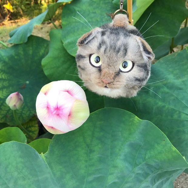 Balo mèo gây lú phá đảo trái tim netizen Nhật, giống thật tới nỗi hội chị em nhìn qua đã muốn xuống tiền mua luôn - Ảnh 13.