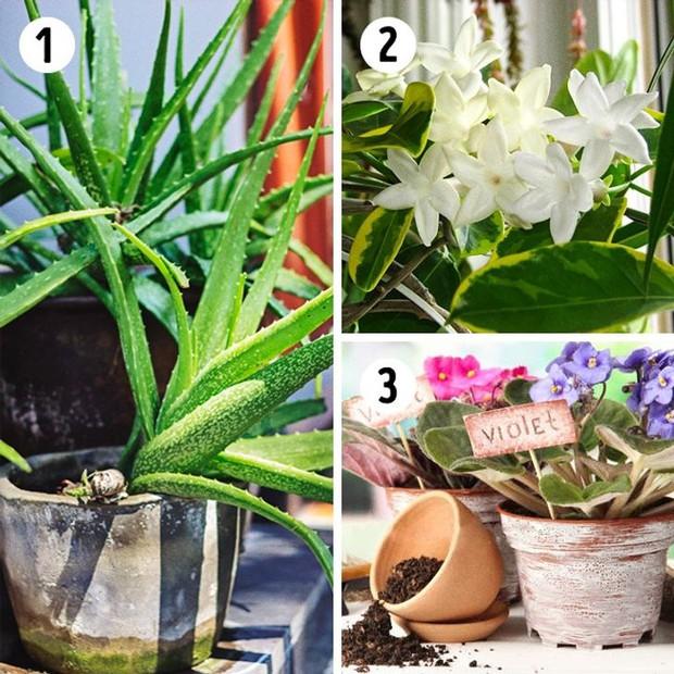 12 loại cây trồng trong nhà phù hợp nhất với từng không gian, lại là máy lọc không khí cực tốt - Ảnh 4.