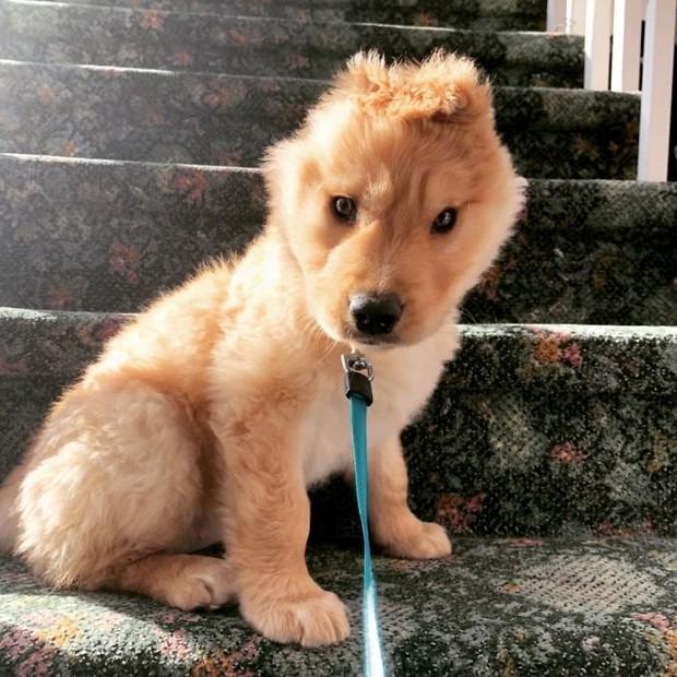 Bị chó mẹ cắn đứt tai khi mới đẻ rồi vụt sáng thành ngôi sao MXH, chú cún kì lân nổi tiếng giờ ra sao? - Ảnh 1.