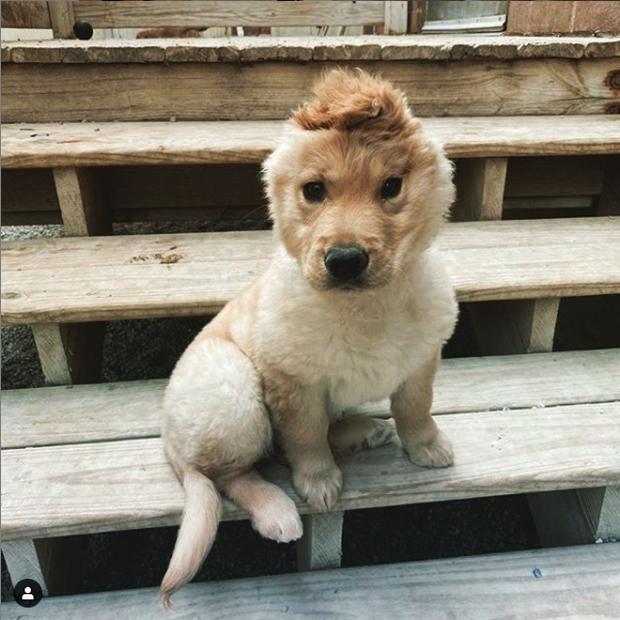 Bị chó mẹ cắn đứt tai khi mới đẻ rồi vụt sáng thành ngôi sao MXH, chú cún kì lân nổi tiếng giờ ra sao? - Ảnh 7.