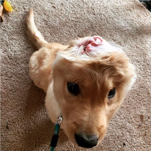 Bị chó mẹ cắn đứt tai khi mới đẻ rồi vụt sáng thành ngôi sao MXH, chú cún kì lân nổi tiếng giờ ra sao? - Ảnh 12.
