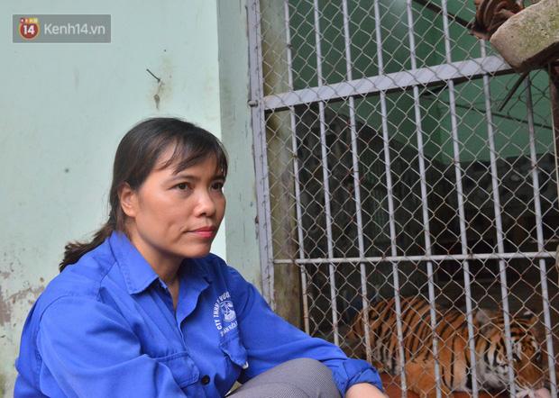 Người phụ nữ 20 năm chăm sóc mãnh thú ở Hà Nội: Lúc rảnh ngồi chải bờm, bắt rận cho sư tử, có lần bị hổ cắn thâm người - Ảnh 1.