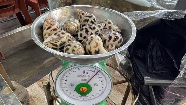Xử phạt nhà hàng bị tố chặt chém 1,8 triệu đồng/kg ốc hương - Ảnh 3.