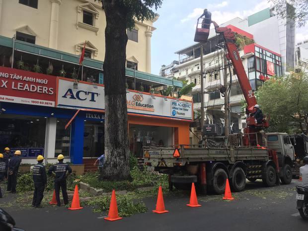 Rùng mình nhánh cây khủng rơi đè bẹp xe máy giao hàng Shopee ở trung tâm Sài Gòn - Ảnh 3.