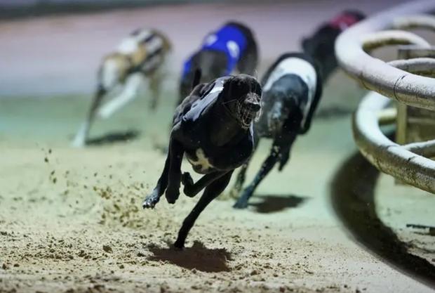 Chú chó ăn ma túy đá, thắng giải gần 100 triệu đồng và cái kết - Ảnh 1.