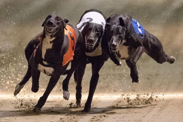 Chú chó ăn ma túy đá, thắng giải gần 100 triệu đồng và cái kết - Ảnh 2.
