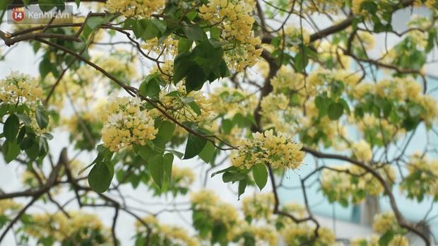 Sau rét nàng Bân, người dân lại được chiêm ngưỡng cây hoa bún bảo vật độc nhất vô nhị toả hương khoe sắc giữa lòng Hà Nội - Ảnh 3.