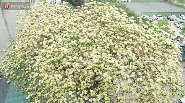 Sau rét nàng Bân, người dân lại được chiêm ngưỡng cây hoa bún bảo vật độc nhất vô nhị toả hương khoe sắc giữa lòng Hà Nội - Ảnh 2.
