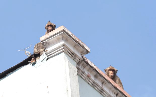 Chuẩn bị đưa đàn khỉ vừa bắt được trong khu dân cư Sài Gòn về rừng tự nhiên  - Ảnh 1.