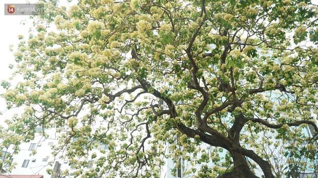 Sau rét nàng Bân, người dân lại được chiêm ngưỡng cây hoa bún bảo vật độc nhất vô nhị toả hương khoe sắc giữa lòng Hà Nội - Ảnh 7.