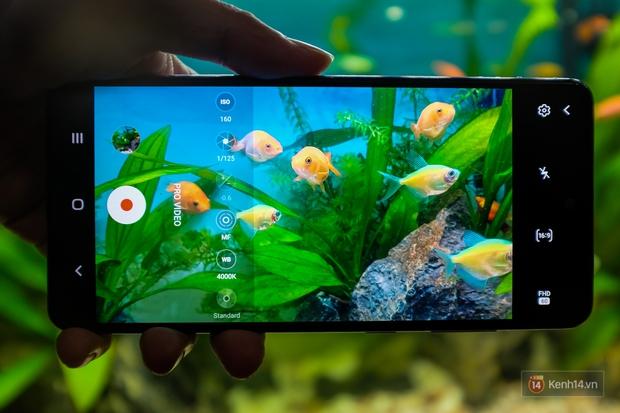 Hướng dẫn chụp ảnh khám phá Thế giới dưới nước với Galaxy A72 - Ảnh 5.