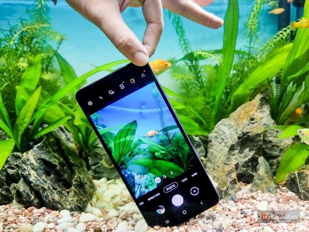 Hướng dẫn chụp ảnh khám phá Thế giới dưới nước với Galaxy A72 - Ảnh 1.