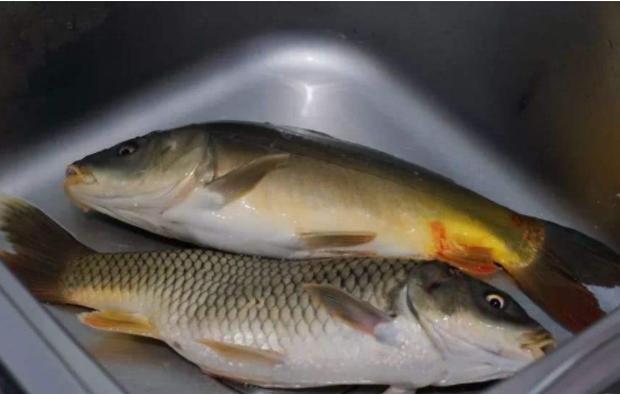 Ăn cá rất tốt cho sức khỏe nhưng có 4 loại thực phẩm này không nên ăn kẻo gây hại cho sức khỏe - Ảnh 2.