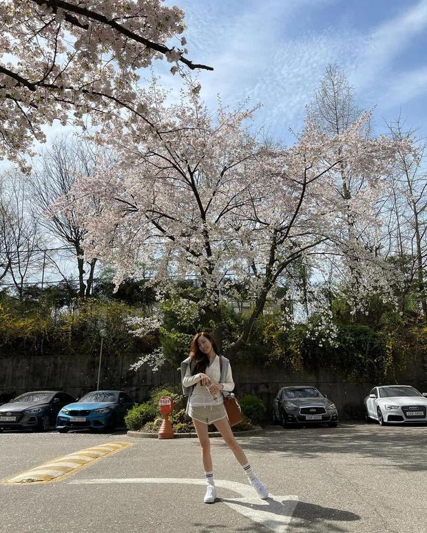 Hoa anh đào phủ kín Lotte World Hàn Quốc tạo nên cảnh tượng y hệt như cổ tích, netizen Việt xem xong ức chế vì 1 lý do - Ảnh 4.