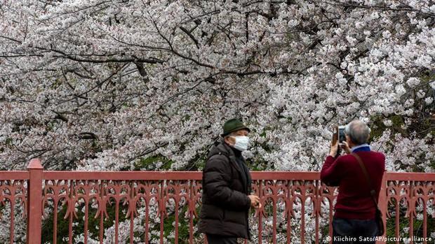 Hoa anh đào Nhật Bản bung nở đẹp mỹ mãn lần đầu tiên trong suốt 1200 năm, nhưng ẩn sau đó là một thảm họa đáng sợ - Ảnh 2.