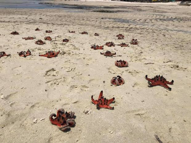 Phản ứng hời hợt của dân mạng về việc sống ảo với sao biển: Chụp xong thả lại xuống nước là nó sống ngay ấy mà? - Ảnh 1.