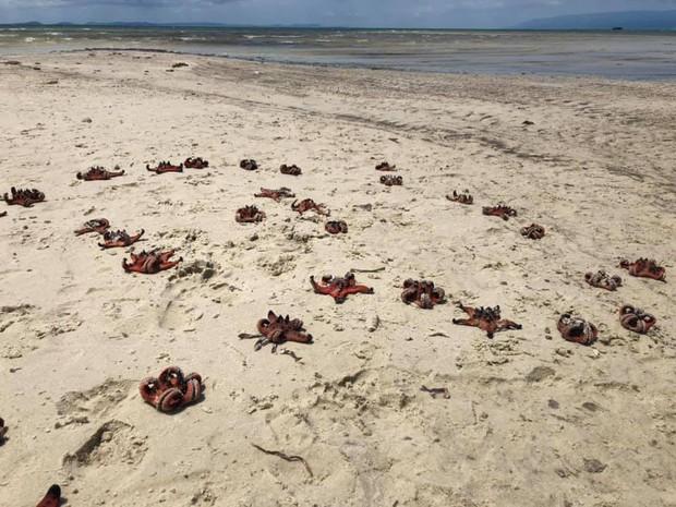 Quỳnh Anh Shyn - An Vy (FAPTV) bị đào lại loạt ảnh bikini với sao biển giữa lúc con vật này đang chết khô hàng loạt ở Phú Quốc - Ảnh 1.