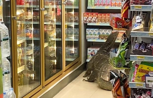 Vào cửa hàng tạp hóa mua đồ, khách la hét hoảng sợ khi chứng kiến cảnh tượng rùng rợn ngỡ quái vật ngoài hành tinh xâm chiếm Trái đất - Ảnh 2.