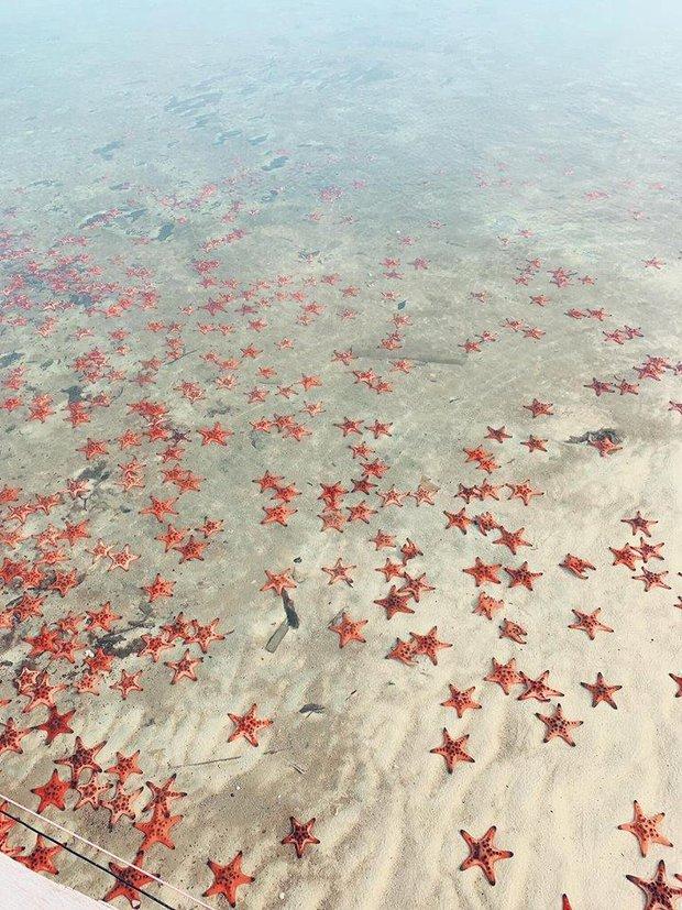Quỳnh Anh Shyn - An Vy (FAPTV) bị đào lại loạt ảnh bikini với sao biển giữa lúc con vật này đang chết khô hàng loạt ở Phú Quốc - Ảnh 2.