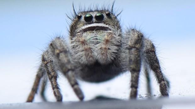Phát điên vì con nhện bé tí teo, chàng trai lấy mỏ hàn ra tấn công rồi lỡ tay đốt trụi nhà - Ảnh 1.