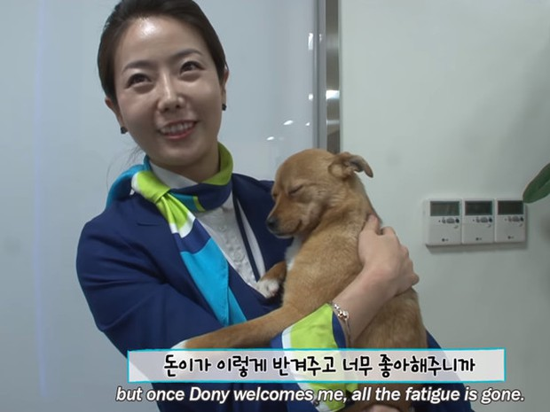 Chú chó mê gái khét tiếng ở sân bay Hàn Quốc: Thấy tiếp viên nữ là sấn sổ bổ nhào, gặp tiếp viên nam thì thờ ơ tránh né - Ảnh 2.