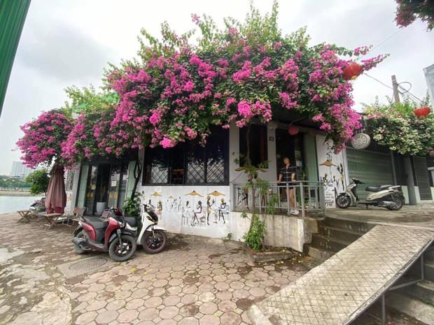 Cư dân mạng rầm rộ khoe giàn hoa giấy trước nhà đẹp rung động lòng người, ai đi qua cũng phải ngước nhìn - Ảnh 4.