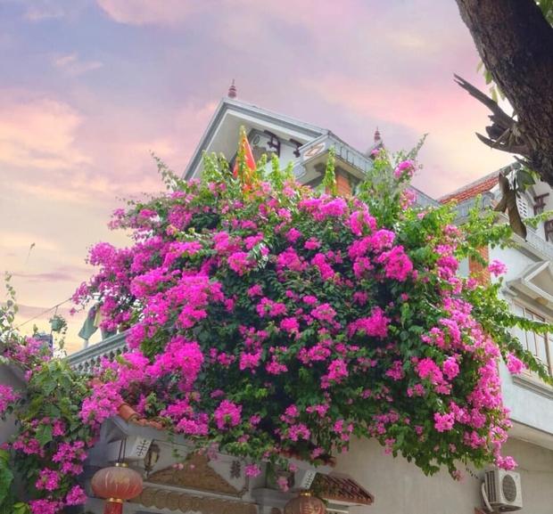 Cư dân mạng rầm rộ khoe giàn hoa giấy trước nhà đẹp rung động lòng người, ai đi qua cũng phải ngước nhìn - Ảnh 5.