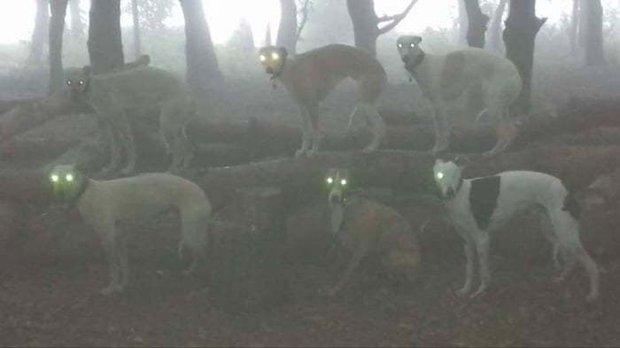 22 chú thú cưng khiến chủ nhân đau tim vì đột nhiên trông kinh dị phát ớn - Ảnh 9.