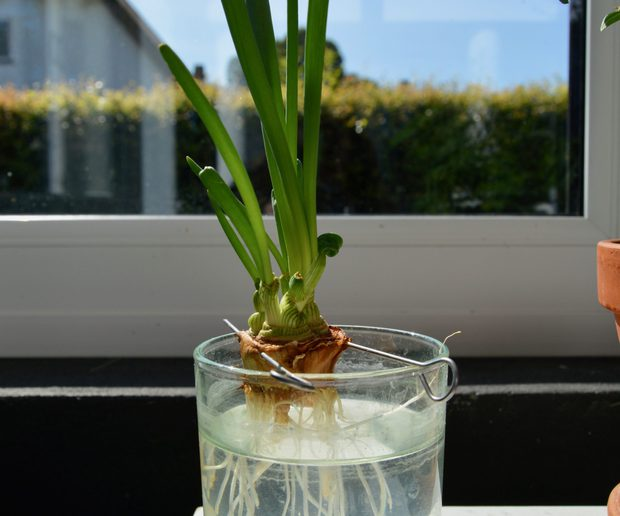 8 loại cây cảnh nên trồng trong nhà bếp vì có khả năng lọc không khí và khử mùi cực tốt - Ảnh 5.