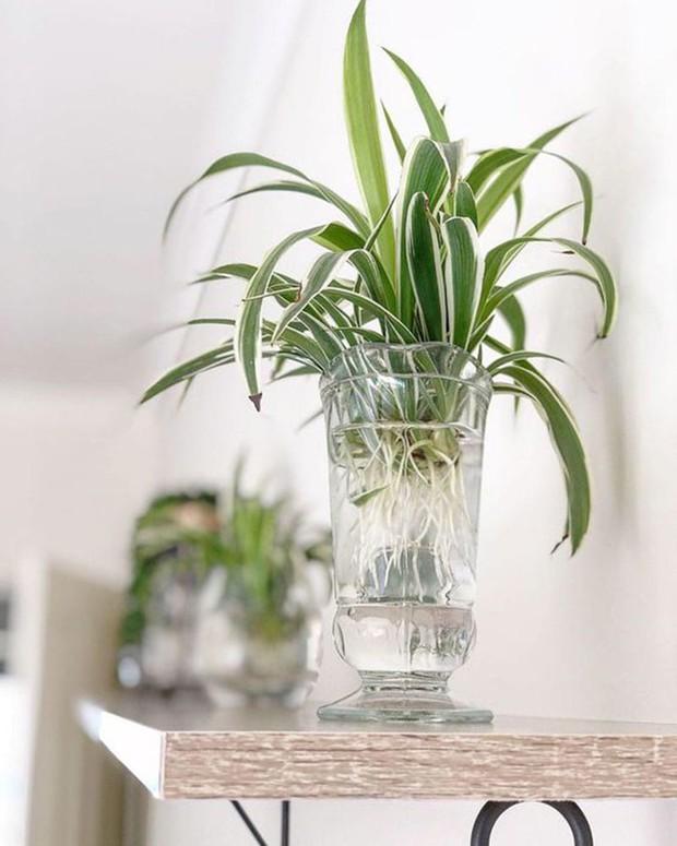 8 loại cây cảnh nên trồng trong nhà bếp vì có khả năng lọc không khí và khử mùi cực tốt - Ảnh 9.