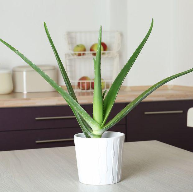 8 loại cây cảnh nên trồng trong nhà bếp vì có khả năng lọc không khí và khử mùi cực tốt - Ảnh 11.