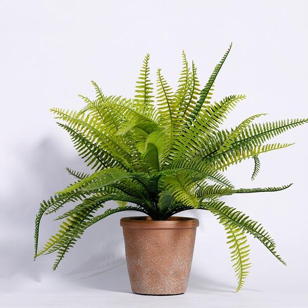 8 loại cây cảnh nên trồng trong nhà bếp vì có khả năng lọc không khí và khử mùi cực tốt - Ảnh 13.