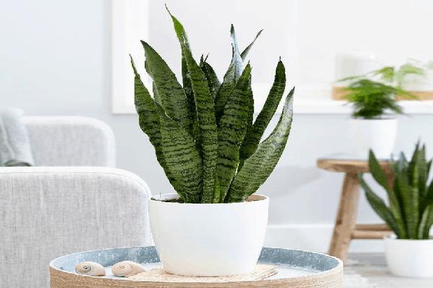 8 loại cây cảnh nên trồng trong nhà bếp vì có khả năng lọc không khí và khử mùi cực tốt - Ảnh 16.