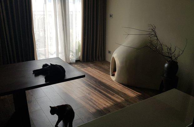 chuyển ra riêng, cô gái mua căn hộ 91m2 để sống đời độc thân trong mơ, đầu tư nhất lại là cái tổ cho thú cưng - ảnh 7.