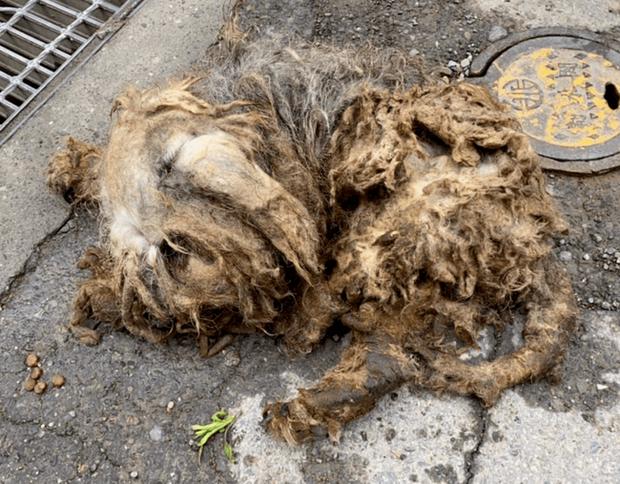 Hai chú chó đáng thương nằm bất động trên đường, trông như giẻ lau nhưng rồi gây ngỡ ngàng với màn lột xác ngoạn mục sau đó - Ảnh 1.