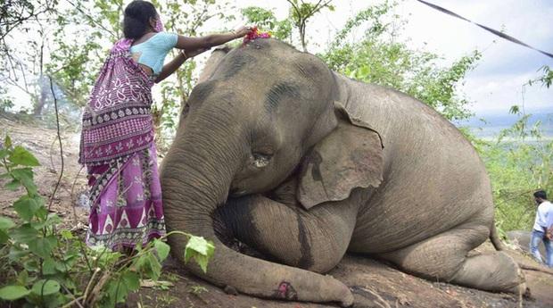 Sét lớn đánh chết 18 con voi ở Ấn Độ - Ảnh 1.