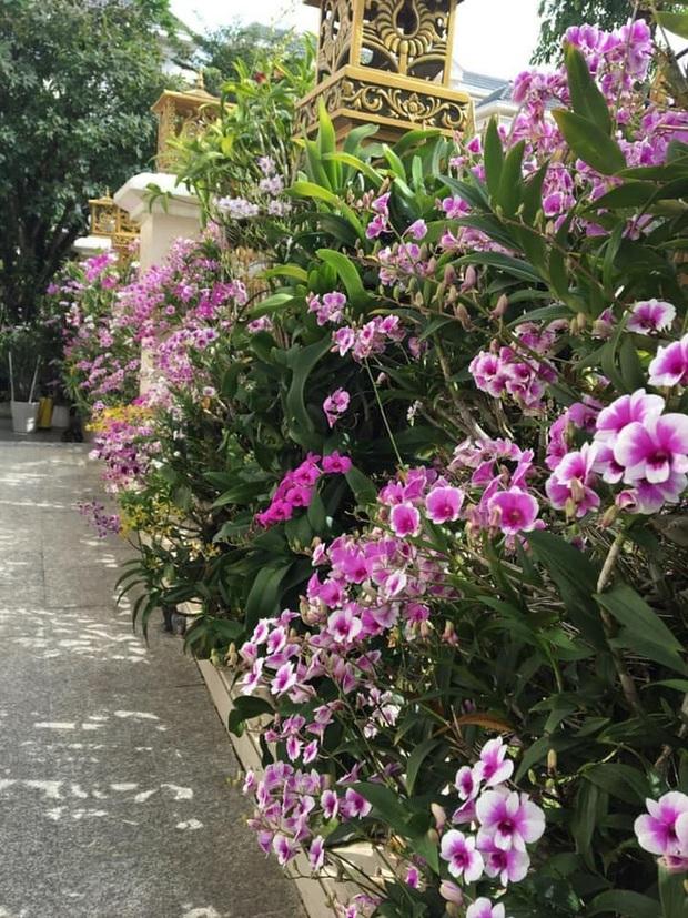 Trầm trồ chiếc hàng rào có hoa lan bung nở rực rỡ, dân mạng mải miết ghen tị vì gia chủ đã giàu lại còn biết cách chơi - Ảnh 1.