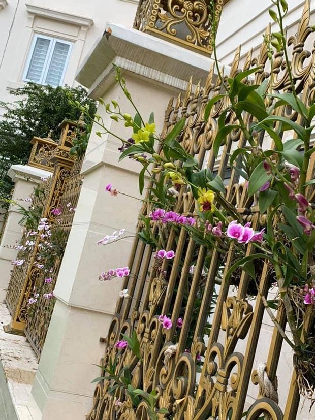 Trầm trồ chiếc hàng rào có hoa lan bung nở rực rỡ, dân mạng mải miết ghen tị vì gia chủ đã giàu lại còn biết cách chơi - Ảnh 2.
