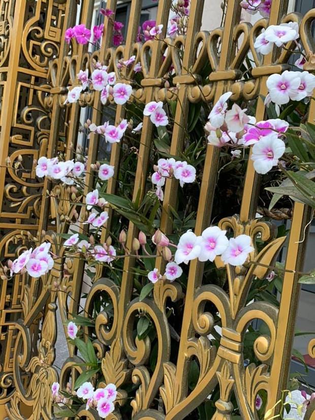 Trầm trồ chiếc hàng rào có hoa lan bung nở rực rỡ, dân mạng mải miết ghen tị vì gia chủ đã giàu lại còn biết cách chơi - Ảnh 3.
