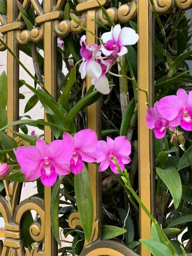 Trầm trồ chiếc hàng rào có hoa lan bung nở rực rỡ, dân mạng mải miết ghen tị vì gia chủ đã giàu lại còn biết cách chơi - Ảnh 4.