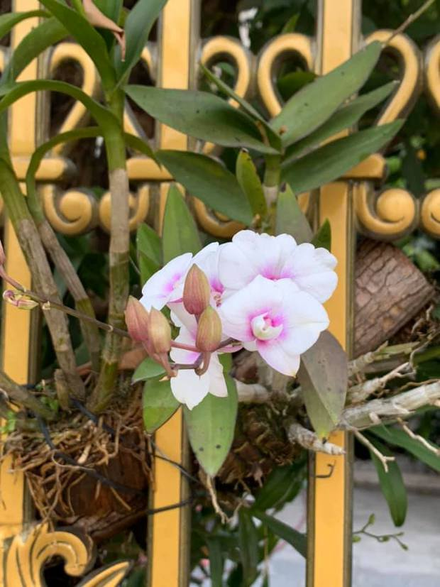 Trầm trồ chiếc hàng rào có hoa lan bung nở rực rỡ, dân mạng mải miết ghen tị vì gia chủ đã giàu lại còn biết cách chơi - Ảnh 5.