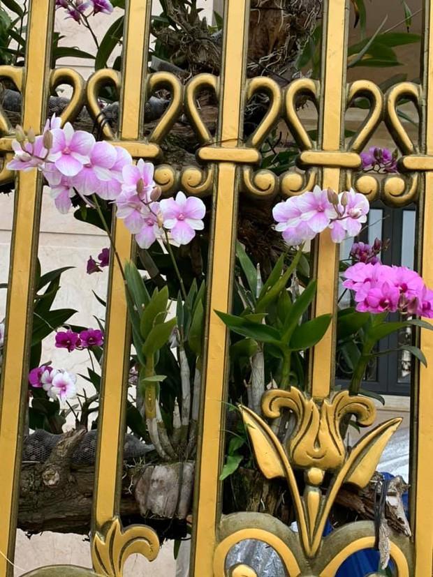Trầm trồ chiếc hàng rào có hoa lan bung nở rực rỡ, dân mạng mải miết ghen tị vì gia chủ đã giàu lại còn biết cách chơi - Ảnh 6.