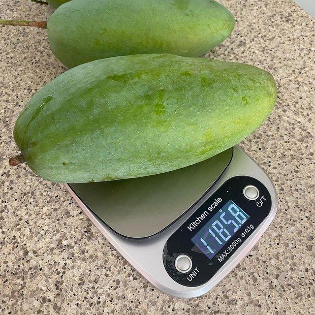 """Dâu hào môn Hà Tăng cuối tuần làm """"nông dân"""", khoe trái xoài bự hơn 1kg trong vườn biệt thự khiến ai cũng trầm trồ - Ảnh 4."""