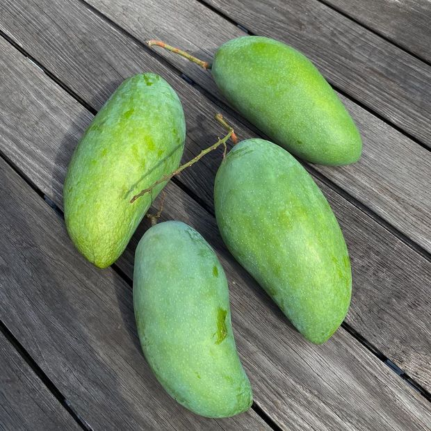 """Dâu hào môn Hà Tăng cuối tuần làm """"nông dân"""", khoe trái xoài bự hơn 1kg trong vườn biệt thự khiến ai cũng trầm trồ - Ảnh 1."""