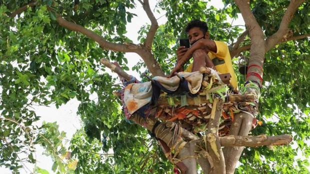 Thiếu hụt cơ sở y tế, chàng trai Ấn Độ trèo trên cây để cách ly sau khi biết mình nhiễm COVID-19 - Ảnh 1.