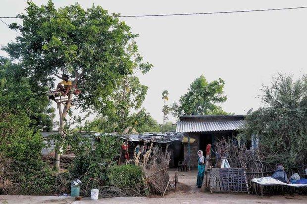 Thiếu hụt cơ sở y tế, chàng trai Ấn Độ trèo trên cây để cách ly sau khi biết mình nhiễm COVID-19 - Ảnh 2.
