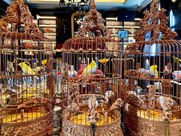 Biệt thự phố cổ Hà Nội của đại gia thời trang Chương Tailor: Xây bể cá Koi 5 tỷ ở ban công, dành nguyên tầng điều hòa nuôi chim đột biến - Ảnh 12.