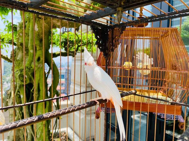 Biệt thự phố cổ Hà Nội của đại gia thời trang Chương Tailor: Xây bể cá Koi 5 tỷ ở ban công, dành nguyên tầng điều hòa nuôi chim đột biến - Ảnh 13.