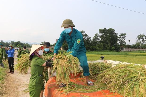 Vĩnh Phúc: Đoàn viên, công an giúp các gia đình bị cách ly y tế thu hoạch lúa chín - Ảnh 3.